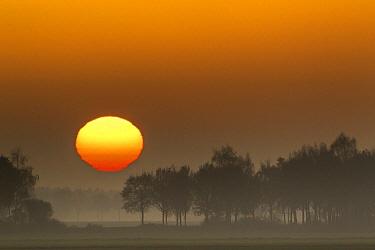 Sun rising over meadow and trees, Eeserveen, Netherlands  -  Karin Broekhuijsen/ Buiten-beeld