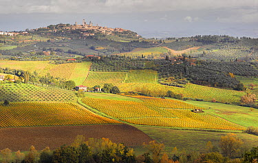 Vineyards and historical town in autumn, San Gimignano, Italy  -  Chris Stenger/ Buiten-beeld