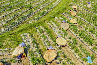 Women working the land in traditional way, central Hainan, China  -  Chris Stenger/ Buiten-beeld