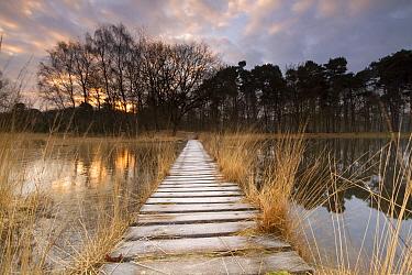 Boardwalk over lake, Buurse, Netherlands  -  Jan Dolfing/ Buiten-beeld