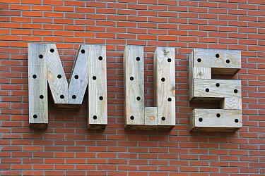 Lettering with holes to be used by birds, Leeuwarden, Netherlands  -  Sjon Heijenga/ Buiten-beeld