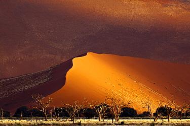 Sand dune, Sossusvlei, Namibia  -  Erik Joosten/ NIS
