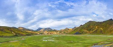 Cottongrass (Eriophorum angustifolium) field, Landmannalaugar, Iceland  -  Jeffrey Van Daele/ NIS
