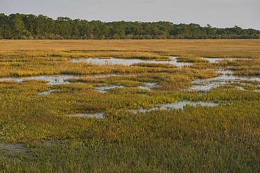 Salt marsh, Little Saint Simon's Island, Georgia  -  Pete Oxford