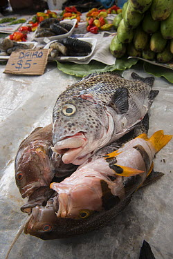 Fish being sold in market, Suva, Viti Levu, Fiji  -  Pete Oxford