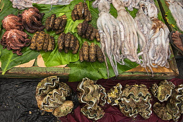 Octopus, sea cucumbers, and clams being sold in market, Suva, Viti Levu, Fiji  -  Pete Oxford