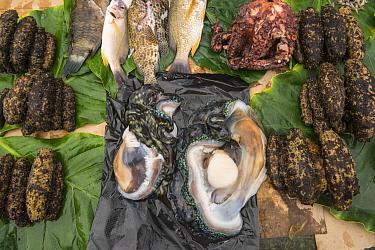 Fish, sea cucumbers, and clams being sold in market, Suva, Viti Levu, Fiji  -  Pete Oxford