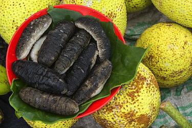 Sea cucumbers being sold in market, Suva, Viti Levu, Fiji  -  Pete Oxford