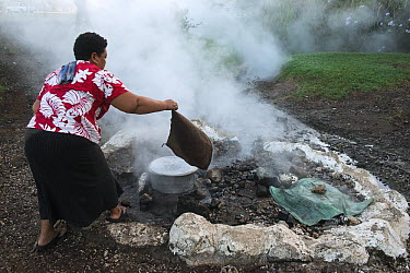 Woman using geothermal hot spring for cooking, Fiji  -  Pete Oxford