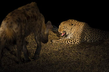 Leopard (Panthera pardus) male snarling at Spotted Hyena (Crocuta crocuta) at night, Sabi Sands Game Reserve, South Africa  -  Andrew Schoeman/ NIS