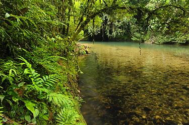 Clear rocky streams indicating pristine habitats are becoming an increasingly rare sight in Malaysia, Lubang Buaya, Batang Ai National Park, Malaysia  -  Ch'ien Lee