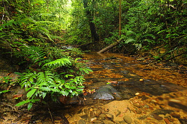 Small rocky stream amid lowland rainforest, Nanga Sumpa, Batang Ai National Park, Sarawak, Malaysia  -  Ch'ien Lee