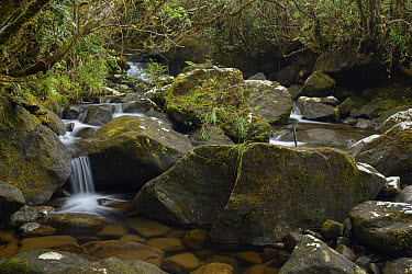Stream cascading over mafic rocks, Mhojeg Peak, Dinalongan, Luzon Island, Philippines  -  Ch'ien Lee