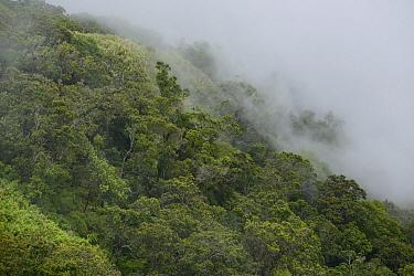 Montane forest near the summit, Gunung Kiematabu, Tidore, Indonesia  -  Ch'ien Lee