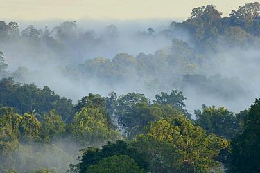 Nantu Wildlife Reserve, Sulawesi, Indonesia  -  Ch'ien Lee