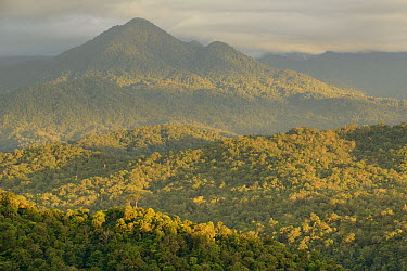 Virgin rainforest, Gunung Gamei, Nabire, Kobowre Mountains, New Guinea, Indonesia  -  Ch'ien Lee