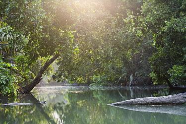 River in rainforest habitat, Ujung Kulon National Park, Indonesia  -  Stephen Belcher