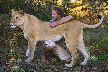 African Lion (Panthera leo) female named Sirga with Valentin Gruener, who raised her from when she was a cub, Kalahari, Botswana  -  Theo Allofs