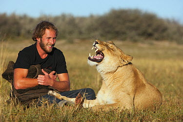 African Lion (Panthera leo) female named Sirga yawning with Valentin Gruener, who raised her from when she was a cub, Kalahari, Botswana  -  Theo Allofs