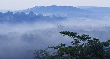 Mist over tropical rainforest, Kibale National Park, western Uganda  -  Sebastian Kennerknecht