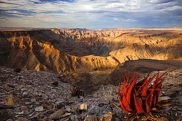 Desert canyon, Fish River Canyon, Namibia  -  Vincent Grafhorst
