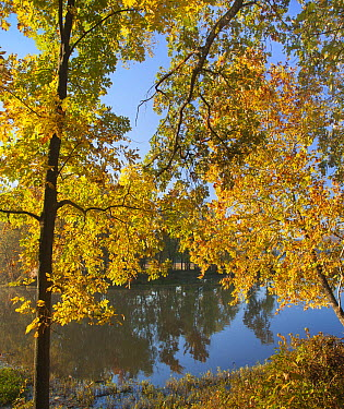 Trees in autumn, Lake Sequoyah, Arkansas  -  Tim Fitzharris