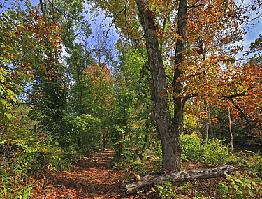 Trail through forest in autumn, Mulberry River, Ozark-Saint Francis National Forest, Arkansas  -  Tim Fitzharris