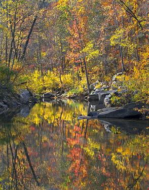 Oak (Quercus sp) and Hickory (Carya sp) forest along creek in autumn, Ozark-Saint Francis National Forest, Arkansas  -  Tim Fitzharris