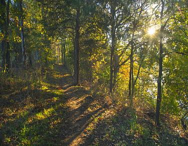 Trail through forest, Lake Sequoyah, Arkansas  -  Tim Fitzharris