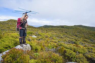 Kakapo (Strigops habroptilus) biologist Dierdre Vercoe tracking indiviudal, Codfish Island, Southland, New Zealand  -  Tui De Roy