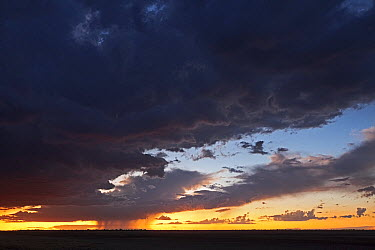 Rainstorm at sunset over plains, Makgadikgadi Pan, Kalahari Desert, Botswana  -  Vincent Grafhorst