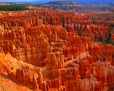 Sandstone hoodoos, Bryce Canyon National Park, Utah  -  Kaz Takahashi/ Nature Production
