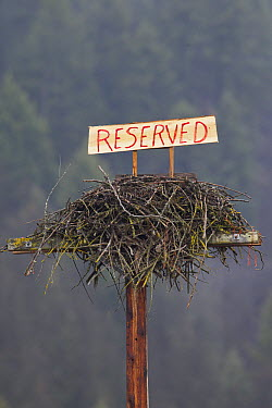 Osprey (Pandion haliaetus) nest with reserved sign on it to keep geese from nesting there before the osprey migrate back, Libby, Montana  -  Donald M. Jones