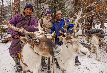 Caribou (Rangifer tarandus) and Tsataan reindeer herders in winter camp, Hunkher Mountains, northern Mongolia  -  Colin Monteath/ Hedgehog House