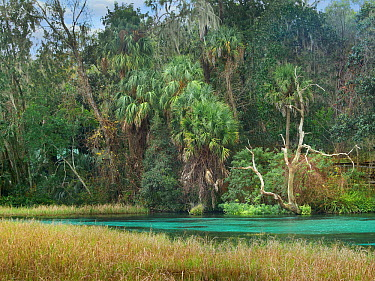 Subtropical forest and marsh, Rainbow Springs State Park, Florida  -  Tim Fitzharris