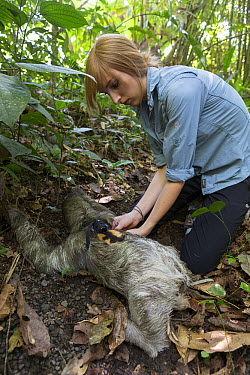 Brown-throated Three-toed Sloth (Bradypus variegatus) biologist, Rebecca Cliffe, fitting sloth with sloth backpack tracking device, Aviarios Sloth Sanctuary, Costa Rica  -  Suzi Eszterhas