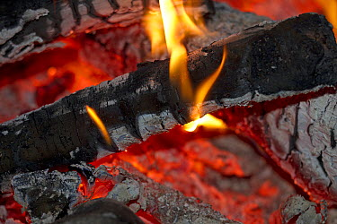 Wood burning in campfire, Poland  -  Jelger Herder/ Buiten-beeld