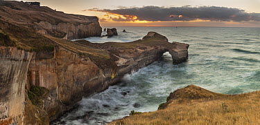 Coastal cliffs, Tunnel Beach, Otago Peninsula, Otago, New Zealand  -  Colin Monteath/ Hedgehog House