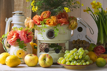 Rose (Rosa sp) flowers and fruit still life  -  Jan Vermeer