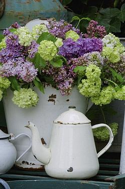 Gentian (Gentianaceae) flower bouquet and teapot  -  Jan Vermeer