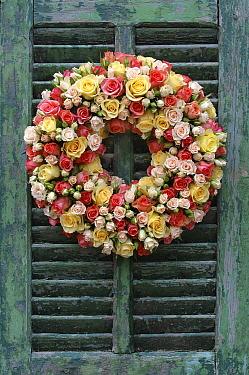 Rose (Rosa sp) wreath  -  Jan Vermeer