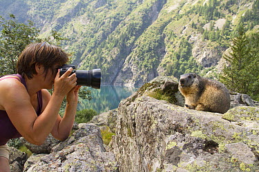 Alpine Marmot (Marmota marmota) and photographer, Alps, France  -  Jean-Jacques Alcalay/ Biosphoto