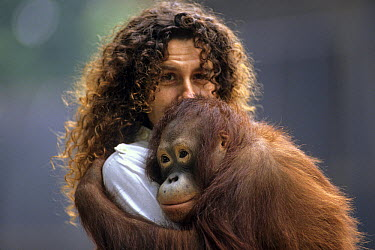 Orangutan (Pongo pygmaeus) held by woman, France  -  Michel Gunther/ Biosphoto