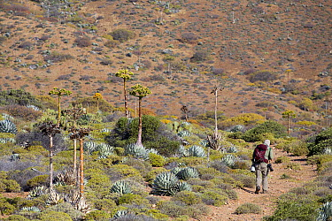 Tourist hiking, Cedros Island, Baja California, Mexico  -  Richard Herrmann