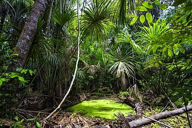 Lowland rainforest, Panguana Nature Reserve, Peru  -  Konrad Wothe
