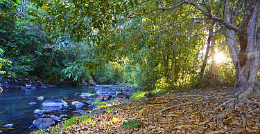 Upper reaches of Johnstone River running through rainforest, Far North Queensland, Australia  -  Martin Willis