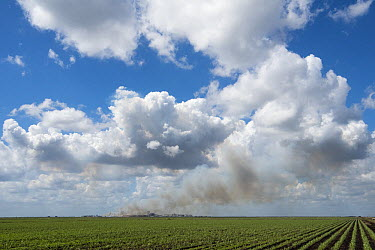 Sugarcane (Saccharum sp) field and refinery, Lake Okeechobee, Florida  -  Scott Leslie