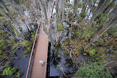 Boardwalk through swamp, Okefenokee National Wildlife Refuge, Georgia  -  Scott Leslie