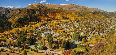 City in autumn, Arrowtown, Otago, New Zealand  -  Colin Monteath/ Hedgehog House