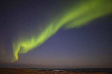 Northern lights above beach, Nordland, Norway